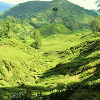 Die Cameron Highlands