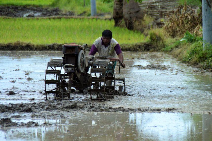 Bestellen der Reisfelder