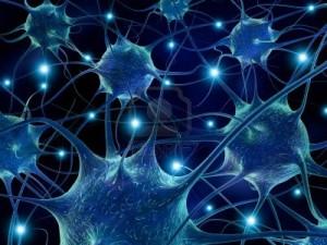 human-brain-cells