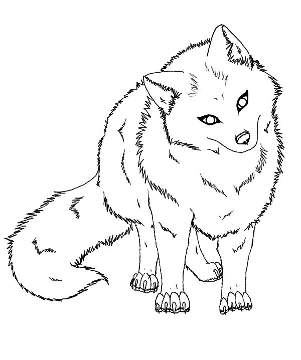 artic fox shaking his head coloring pages  best place to