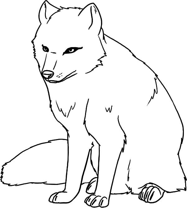 female artic fox coloring pages best place to color