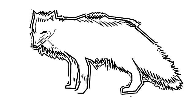 how to draw artic fox coloring pages best place to color