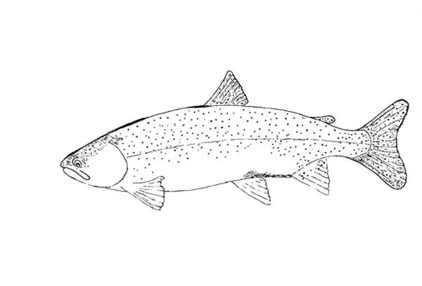 Trout Fishing Coloring Pages Fishing Target Bass Fish Coloring