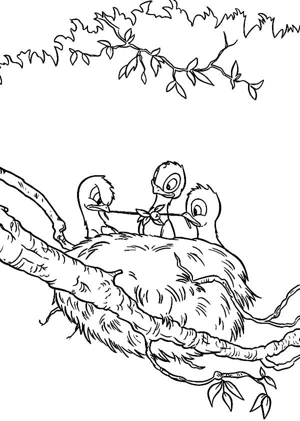 bird nest baby bird eating in their bird nest coloring pages