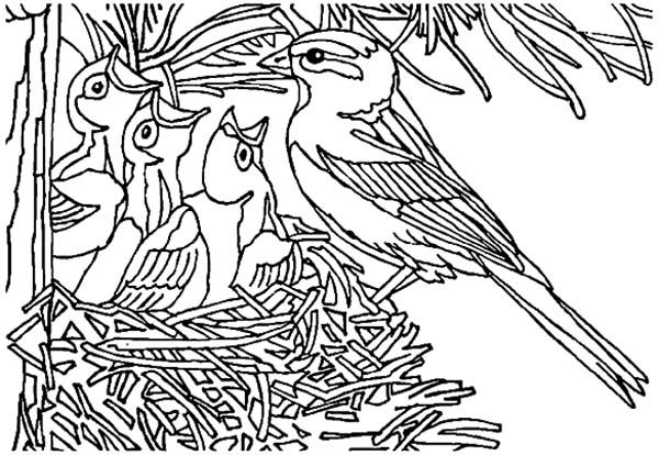 Baby Bird Coloring Page Pages Getcoloringpages Rhioztfp7de: Coloring Pages Baby Birds At Baymontmadison.com