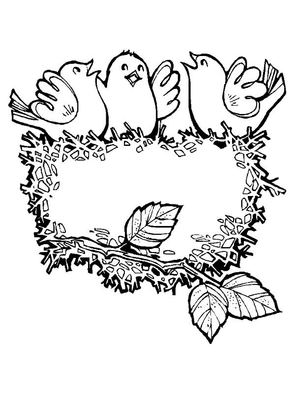 baby bird singing in their bird nest coloring pages best place