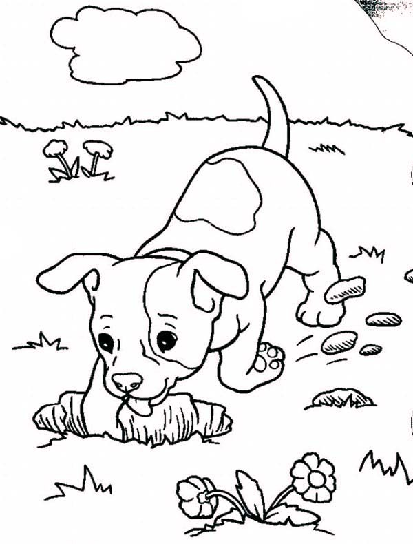 baby boxer dog digging hole coloring pages best place to color