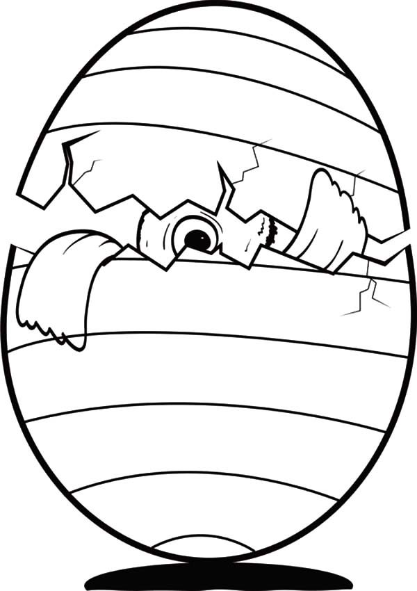 baby chicken peeking from broken egg coloring pages best place
