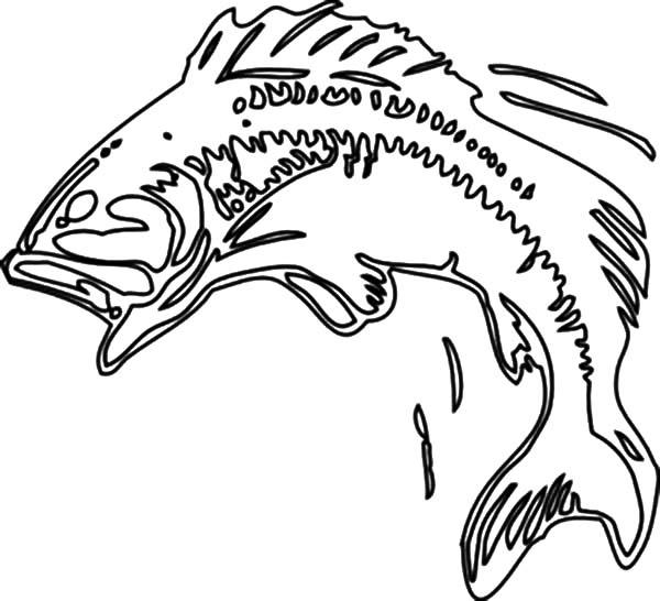bass fish bass fish body print coloring pages bass fish body print