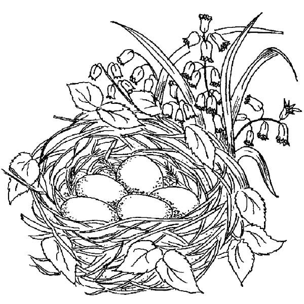beautiful nest beautiful nest