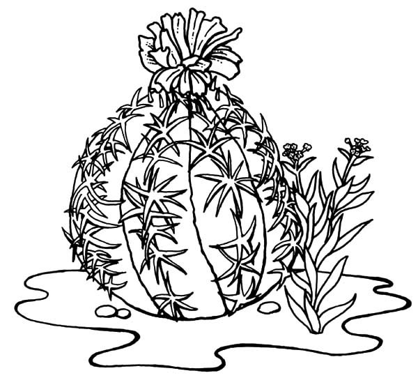 coloring pages cactus wren coloring page desert cactus coloring pages