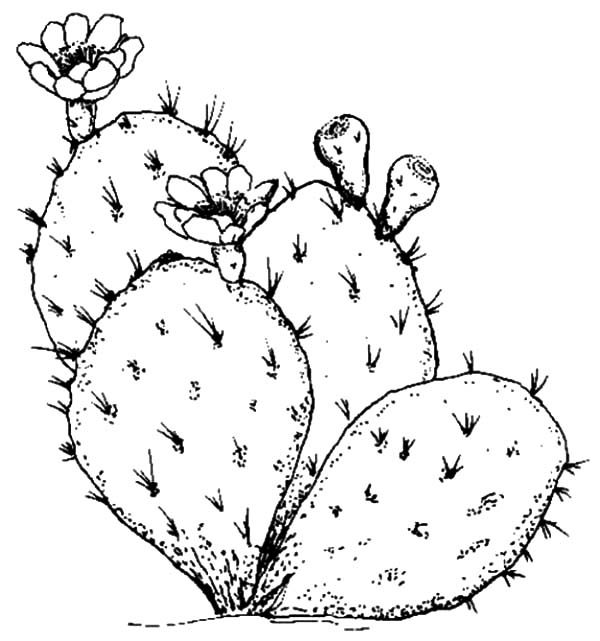 Kawaii Funny Characters Cactus Cactaceae Coloring Pages Printable | 641x600