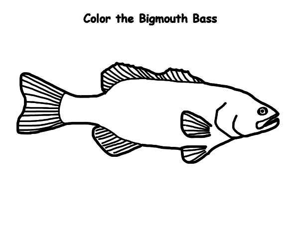 bass fish bigmouth bass fish coloring pages