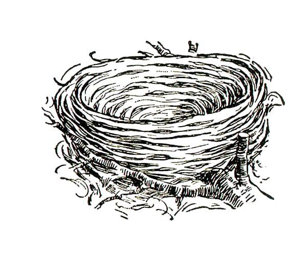 baby bird coloring pages hungry baby bird in bird nest coloring