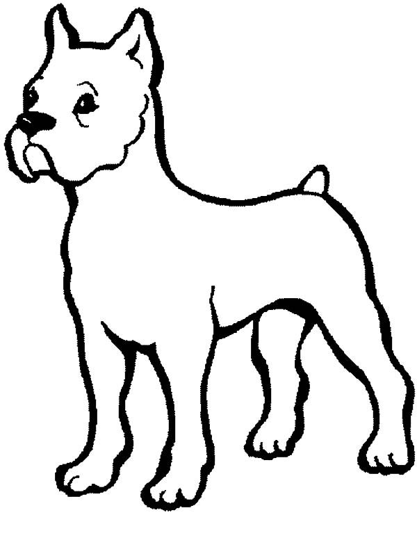 boxer dog baby coloring pages best place to color