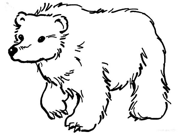brown bear looking for food coloring pages best place to color
