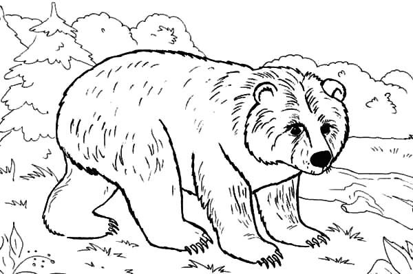 brown bear in the jungle coloring pages best place to color