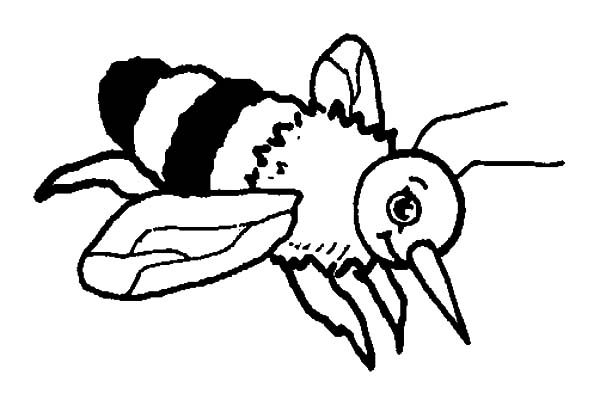 bumble bee bumble bee sting coloring pages
