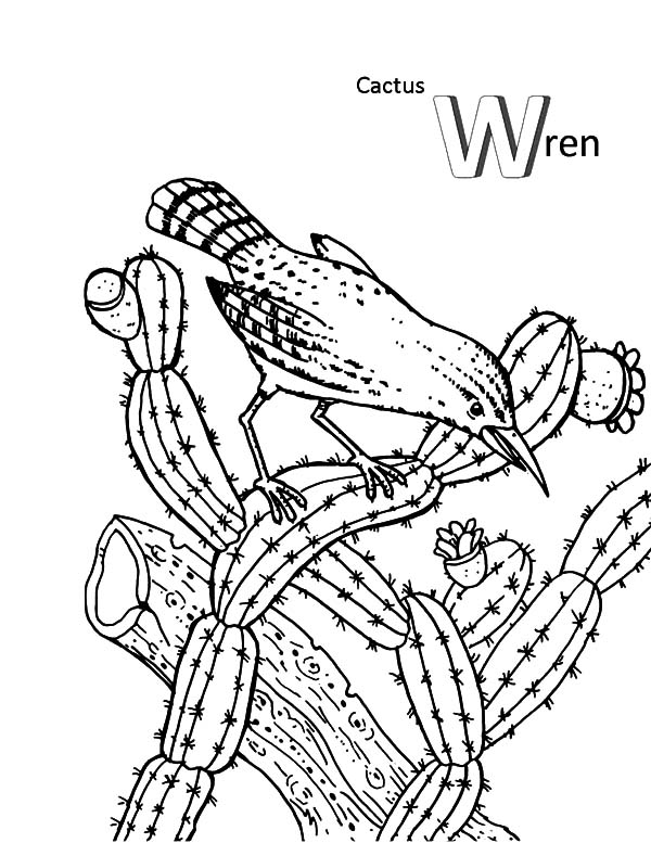 cactus wren and a bird coloring pages cactus wren and a bird coloring