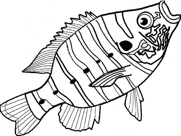 bass fish delicious bass fish coloring pages