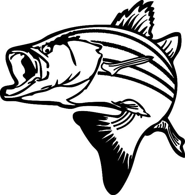 bass fish drawing stripped bass fish coloring pages