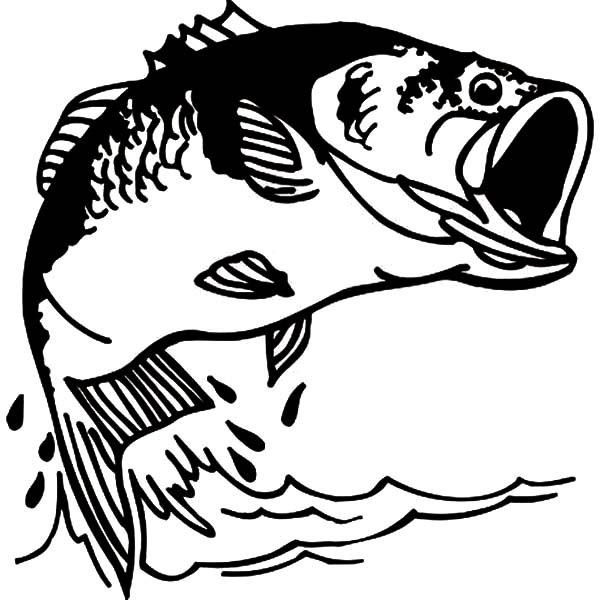 fishing bass fish coloring pages fishing bass fish coloring pages