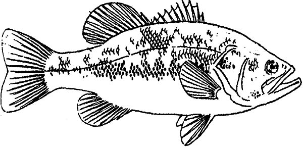 bass fish coloring pages fishing target bass fish coloring pages