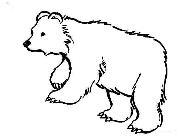 hairy brown bear coloring pages best place to color
