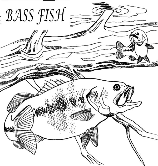 bass fishing coloring pages bass fish coloring pages