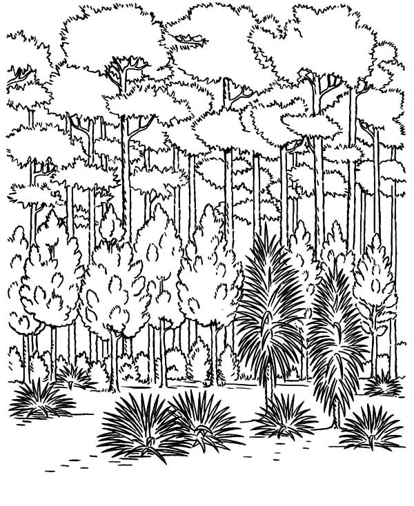 keep our forest green on arbor day coloring pages  best