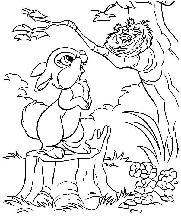 little rabbit saw bird nest and baby bird coloring pages best