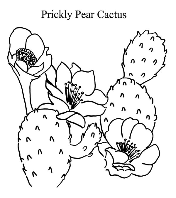 prickly pear cactus coloring pages prickly pear cactus coloring pages