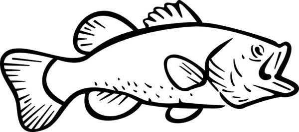 bass fish river bass fish coloring pages river bass fish coloring