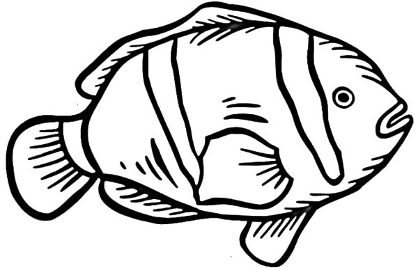 coloring page of a clown fish coloring pages now