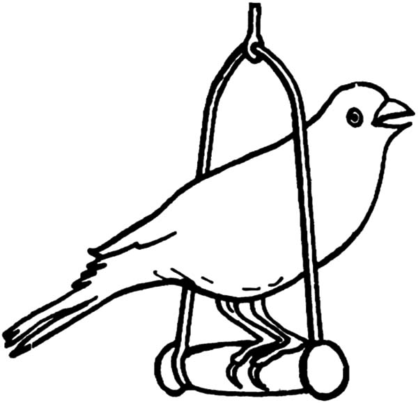bird canary bird pet coloring pages canary bird pet coloring pages