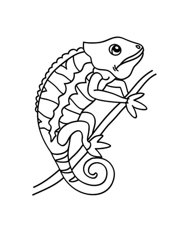 chameleon changing color coloring pages chameleon changing color