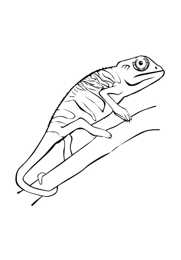 chameleon climb on tree coloring pages chameleon climb on tree