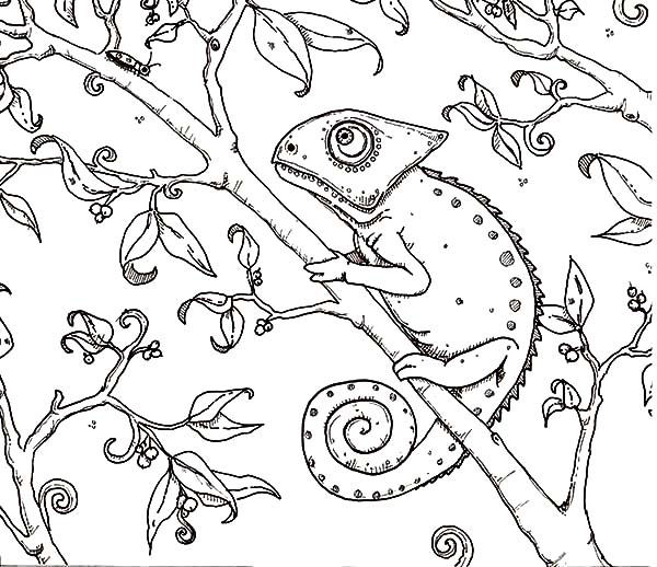 chameleon painting coloring pages best place to color