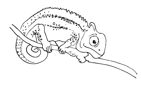 chameleon is capable to look in two direction coloring pages