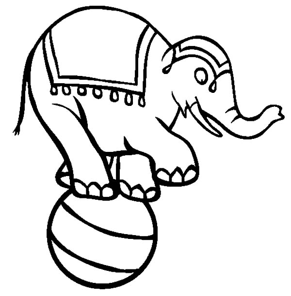 free circus elephant coloring pages cooloring com