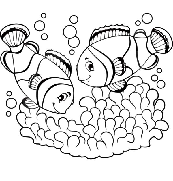 clown fish couple mating coloring pages best place to color