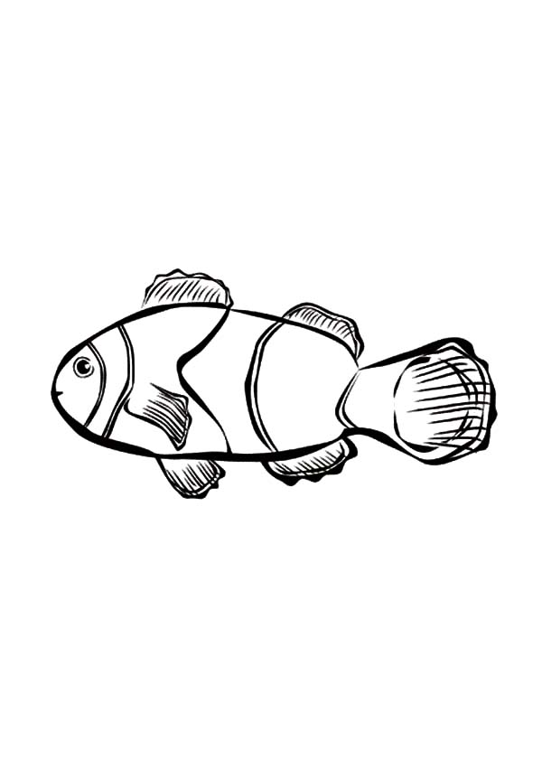 drawing clown fish coloring pages best place to color