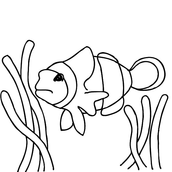 nemo fish coloring pages