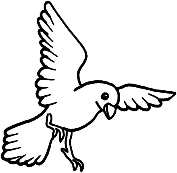 bird coloring pages 88 free birds coloring pages amp birds