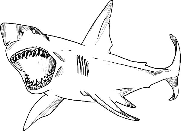shark jaws coloring pages for kids shark jaws coloring pages for kids