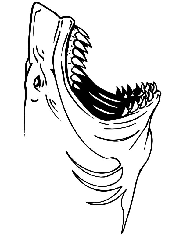 jaws shark coloring pages best place to color