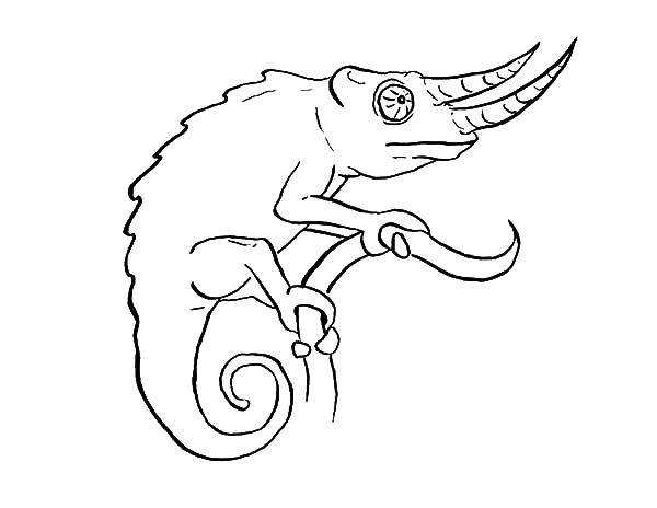 long nosed chameleon coloring pages best place to color
