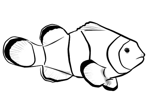 clown fish coloring page hallow coloring pages ideas