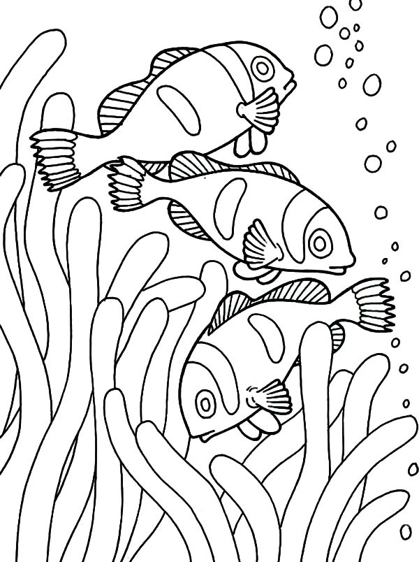 school of clown fish coloring pages best place to color