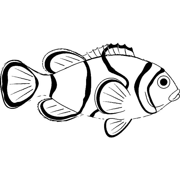 clown fish coloring page aaldtk